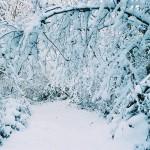 Paysage-de-neige-12