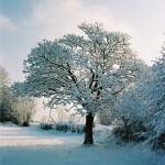 Paysage-de-neige-6