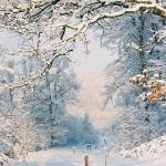 Paysage-de-neige-7